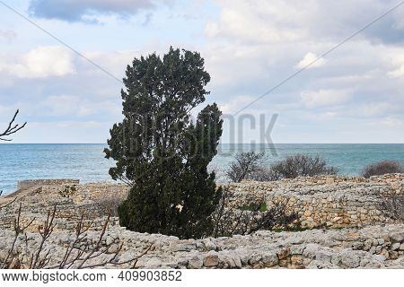 Cypress Among Ancient Ruins On The Seashore