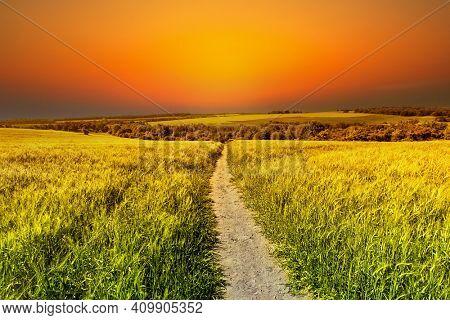 Golden fields of grain at sunset