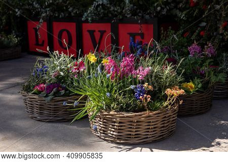 Happy Spring Mood Baskets Of Flowering Plants Outside The Flower Shop.