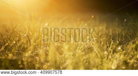 Golden grass nature sunlight banner, background. Pollen allergy, hey fever concept in spring or summer.