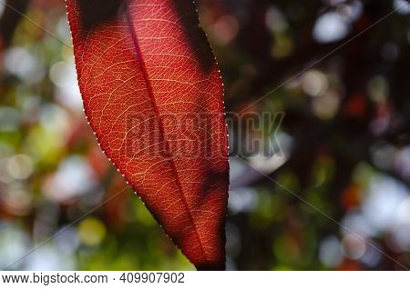 Leaf Vein Nervure Abstract Vibrant Bright Light Shining Through The Veins With Detailed Structure Of