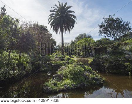 Small Pond Or Lake And Lush Vegetation At Botanical Garden, Jardin Botanico Canario Viera Y Clavijo,