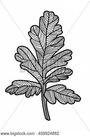 Vintage Leaf With Streaks On A White Background