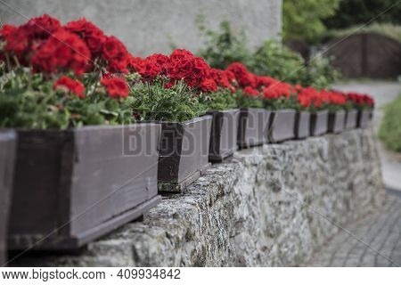 Stone Fence Decorated With Wooden Pots With Red Geranium Blooming