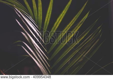 Palm Leaf By Night Next To Window With Moon In The Background And Deep Contrasty Moody Lighting
