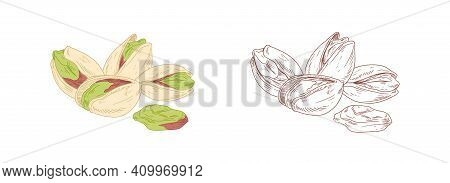 Colored Pistachio And Unpainted Outlined Sketch Of Pistaches. Peeled And Unopened Nut Fruits. Hand-d