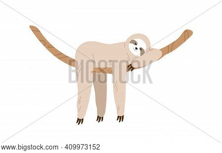Cute And Funny Sloth Hanging On Tree Branch And Sleeping. Slow And Lazy Animal Relaxing On Liana. Ba