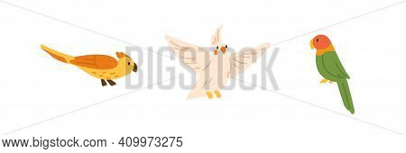 Set Of Exotic Birds - Yellow Parrot With Crest, Flying Cockatiel And Bright Colorful Lovebird. Color