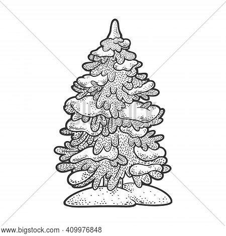 Spruce Pine Tree In Snow Sketch Engraving Vector Illustration. T-shirt Apparel Print Design. Scratch
