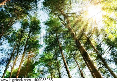 Spring landscape, spring forest tree tops against blue spring sky, spring forest background, sunny spring forest, forest spring nature, spring forest tree tops, spring forest trees