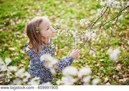 Adorable Little Girl Enjoying Nice And Sunny Spring Day Near Apple Tree In Full Bloom. Outdoor Sprin