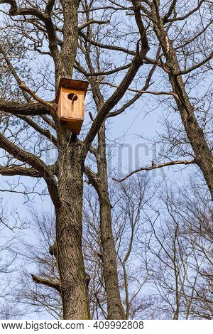 Wooden Nesting Box. Nesting Boxes For Owls On Oak Tree. An Owl's Nest. Protection Of Endangered Bird