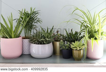 House Plants Display. Indoor Plants On Shelf With Morning Sun Beams. Collection Of Various Succulent