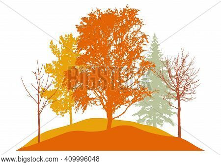 Autumn Season, Silhouette Of Birch, Bare Trees, Fir Trees And Other. Beautiful Nature, Woodland. Vec