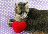 Sad kitty next to plushie heart . poster