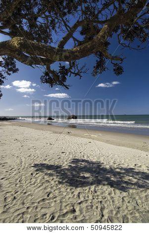 Shady spot underneath a pohutukawa tree on a North island beach, New Zealand.