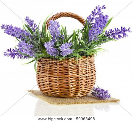 basket with lavender flowers plant  isolated on white background