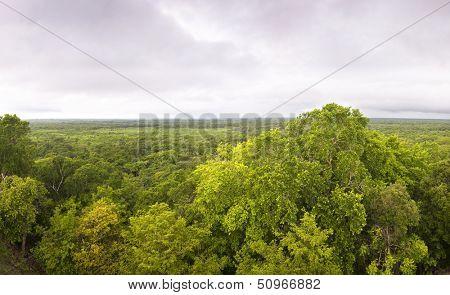 Virgin forest of Ek Balam, Yucatan, Mexico