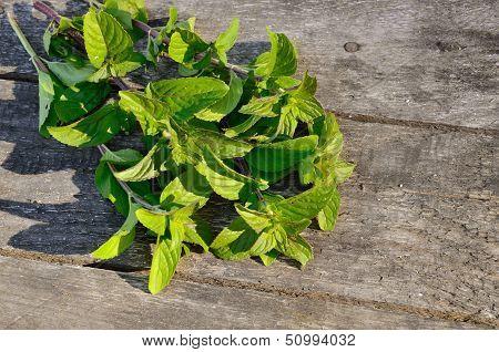 Green Peppermint