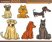 Cartoon Comic Illustration of Canine Breeds or Purebred Dogs Set poster