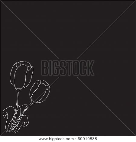 two tulips on a black background