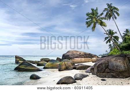 Spectacular  Palm-fringed  Beach Of Tropical Island