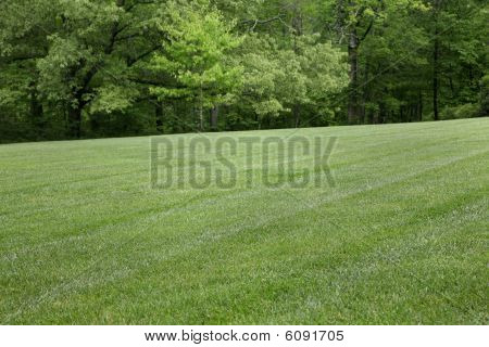 Grass And Background Trees