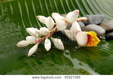 beautiful tropical flower and wet palm Frond