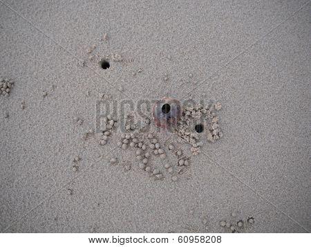 Sand crab home