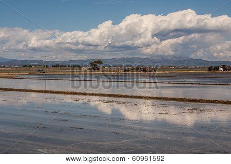 View Of A Paddy Field In Delta De L'ebre, Catalonia, Spain