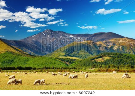 Mountain landscape with grazing sheep New Zealand poster