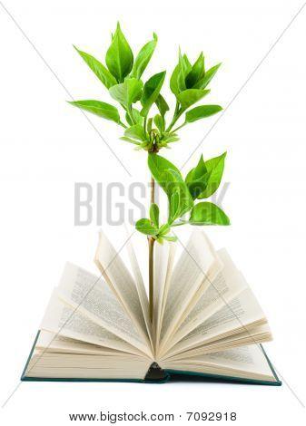 Buch und Pflanze