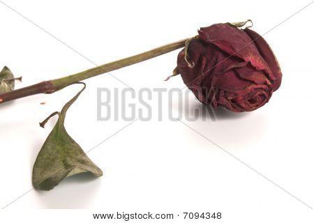 Rose - Dried