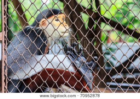 Close up of a monkey in Dusit zoo Thailand