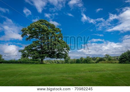 Large Oak Tree 2