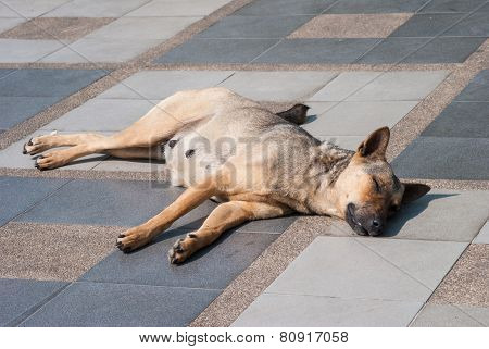 Abandoned Homeless Stray Dog Sleeping On The Street