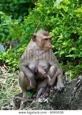 The Monkey With baby monkey