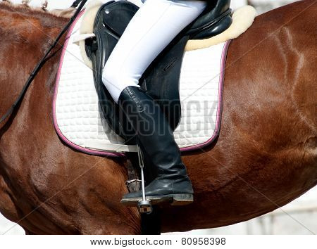 Rider On A Horse Closeup