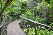 Kirstenbosch Centenary Tree Canopy Walkway called the Boomslang (Tree Snake) winding for 130 meters like a snake 12 meters above the ground poster