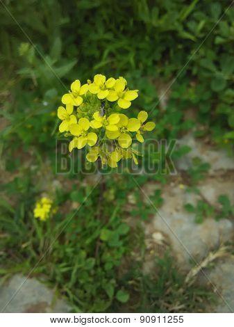 Flor amarilla con insecto