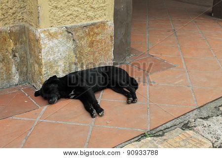 Sleeping Black Dog In Cuenca, Ecuador