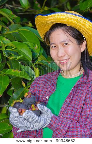 Female Agriculturist Hand Showing Mangosteens