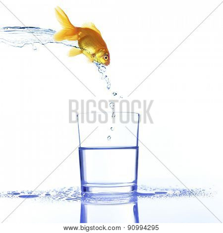 Goldfish jumping into glass, isolated on white