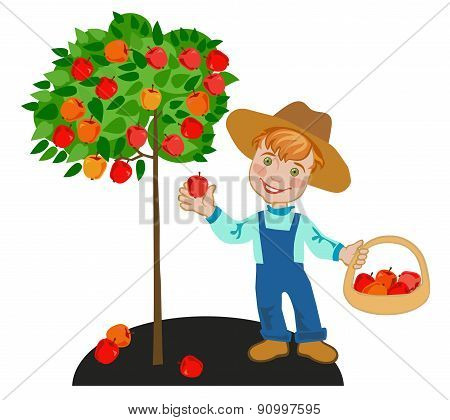 Child In Garden With Crop Of Red Apples
