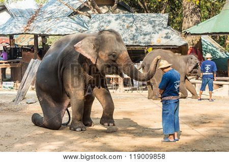 Elephant Is Sitting And Putting Hat On Mahout 's Head
