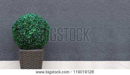 Artificial boxwood ball - panorama