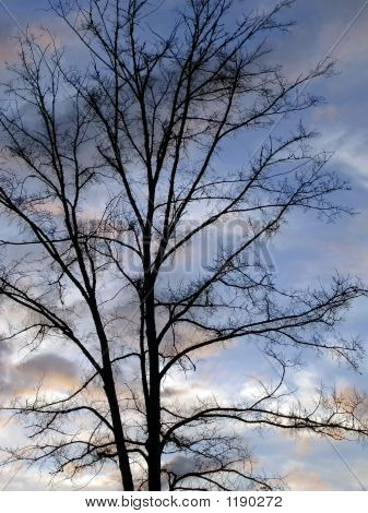 Tree Against A Cloudy Evening Sky