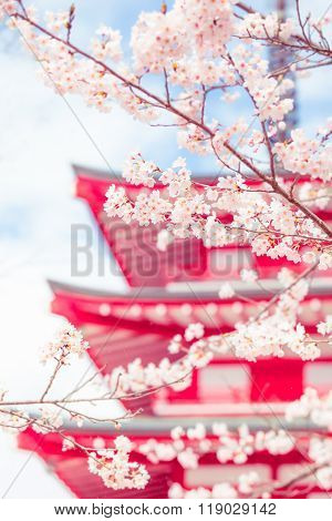Branches of japanese cherry blossoms and red padoga at background