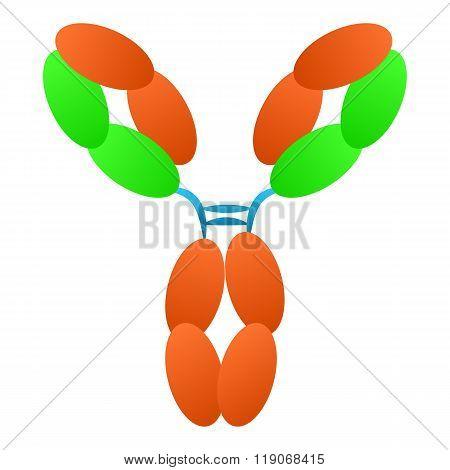 Antibody immunoglobulin molecule structure