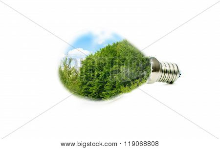 Led Lamp With A Picture Of A Green Forest Inside